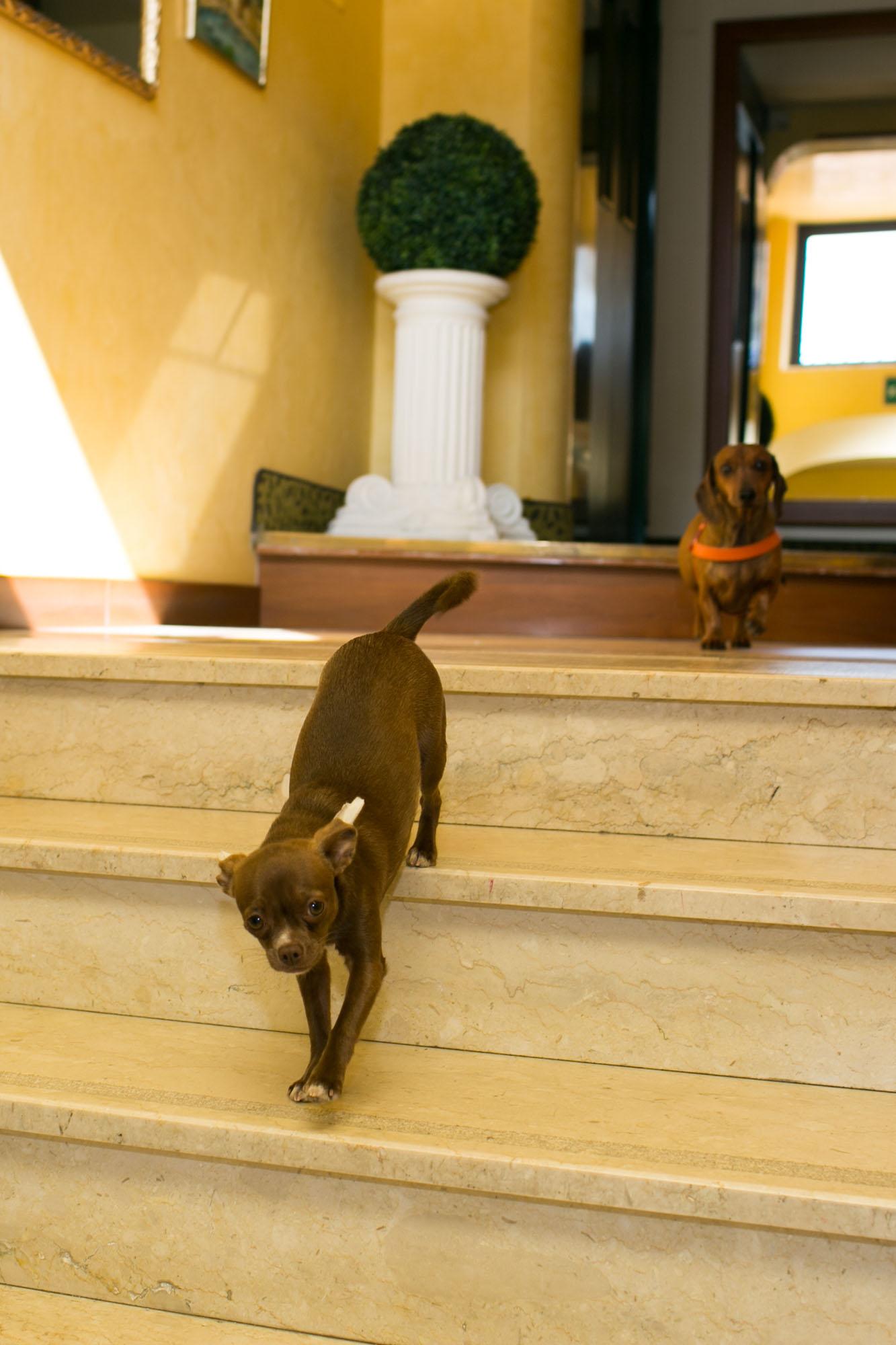 Cani che passano davanti alla reception